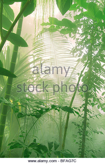 Rainforest vegetation in mist, Atlanta Botanical Garden, Atlanta - Stock Image