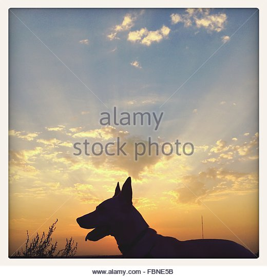 Silhouette Dog On Field Against Sky At Dusk - Stock Image