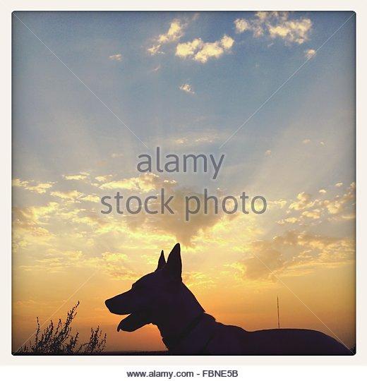 Silhouette Dog On Field Against Sky At Dusk - Stock-Bilder
