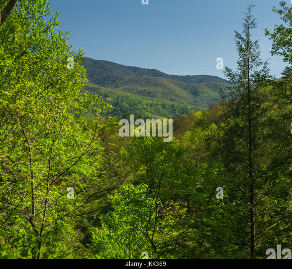 Spring, from Foothills Parkway, TN - Stock Image