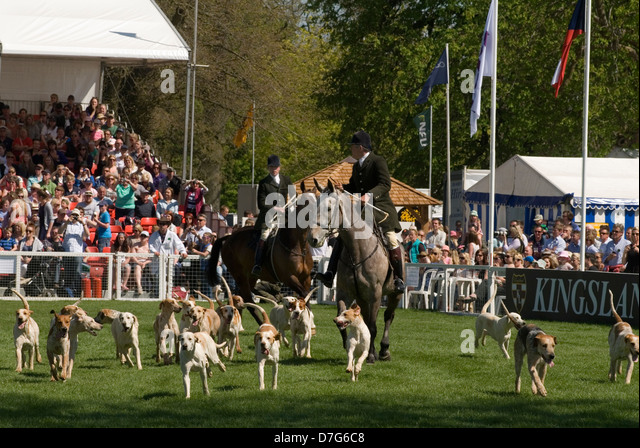 Badminton Horse Trials Gloucestershire UK. The Parade of Hounds in the Main arena. HOMER SYKES - Stock Image