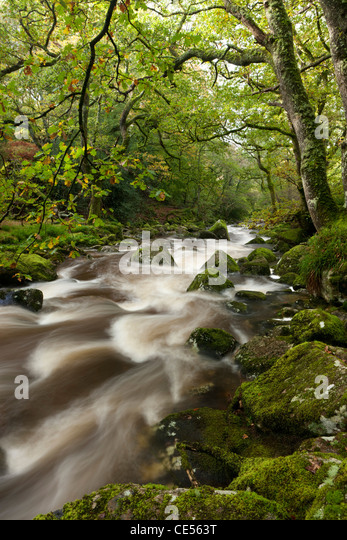River Plym flowing through Dewerstone Wood, Dartmoor, Devon, England. Autumn (October) 2011. - Stock Image