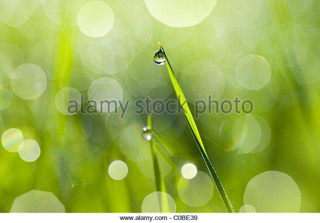 Close up of a dew drop on a blade of grass. - Stock-Bilder