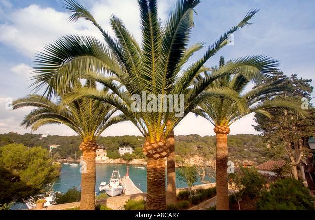 Mallorca Cala Figuera palm trees Fjord - Stock Image