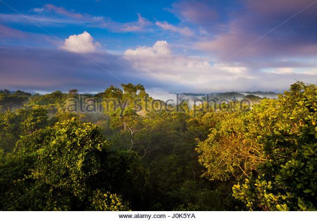 Morning in Soberania national park, Republic of Panama. - Stock-Bilder