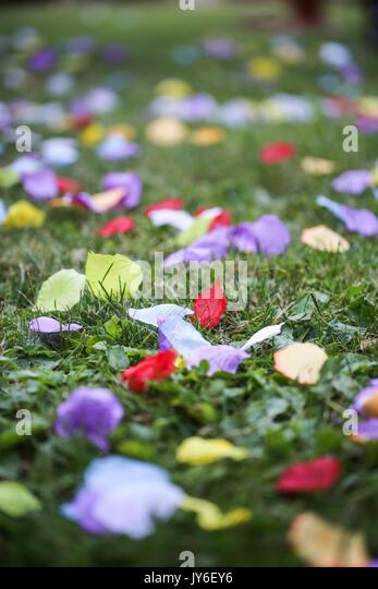 Silk Rose Artificial Petals - Stock Image