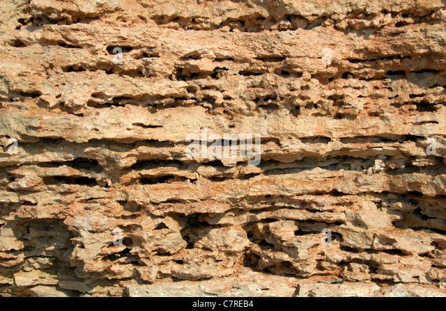 The limestone texture - Stock-Bilder