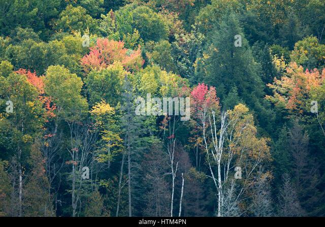 Autumn colours fringing Charlton Lake, nr Whitefish Falls, Sudbury District, Ontario, Canada - Stock-Bilder