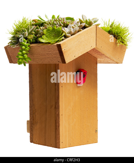 Birdhouse with living roof. Various succulents - Stock Image