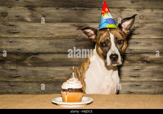 Dog Birthday Cake Sydney