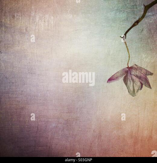 Minimal flower - Stock Image
