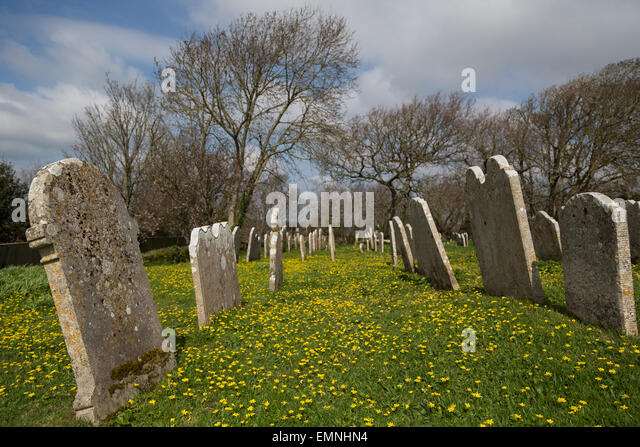 Yellow wood anemone flowers surround old gravestones in a churchyard in Godshill, the Isle of Wight - Stock Image