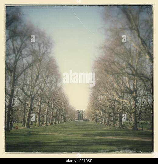Avenue of trees in green park London - Stock Image