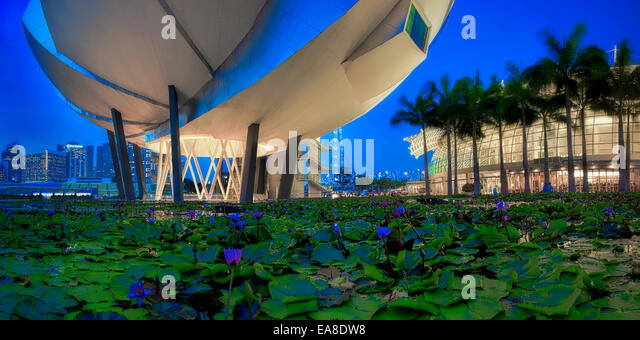 Lily Pond - Stock Image