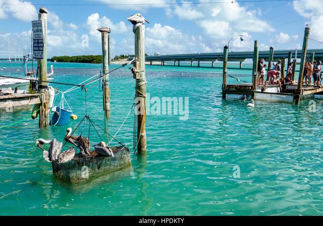 Islamorada Florida Upper Florida Keys Lower Matecumbe Key Robbie's Marina Florida Bay Route 1 Overseas Highway waterfront - Stock Image
