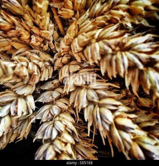 Bundle of wheat - Stock Image