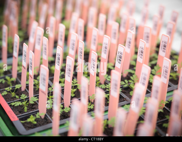 Close up of labels in potted plants - Stock Image
