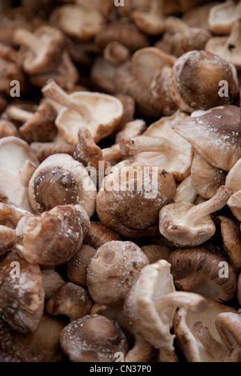 Shiitake mushrooms - Stock Image