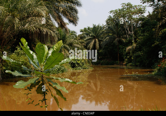 A river running through the Lola Ya Bonobo sanctuary park just outside of Kinshasa. DRC. Central Africa. - Stock-Bilder