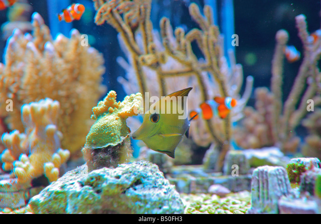 fishtank stock photos fishtank stock images alamy. Black Bedroom Furniture Sets. Home Design Ideas