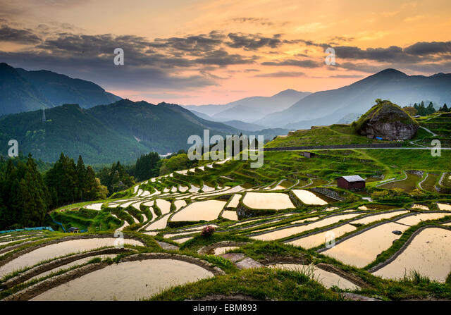 Rice Paddies at Maruyama Senmaida in Kumano, Japan. - Stock Image