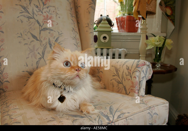 Leesburg Virginia West Market Street Serendipity on the Vine cat chair - Stock Image