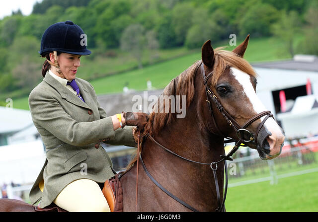 Royal Welsh Spring Festival, Builth Wells, Powys, Wales - May 2017 - A competitor rider in the horse show jumping - Stock Image