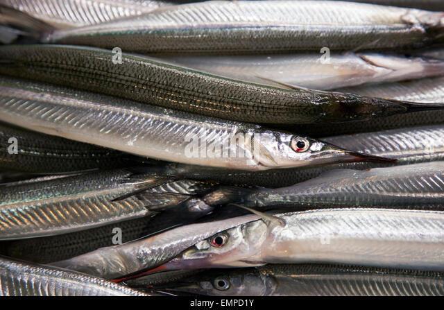how to catch garfish at night