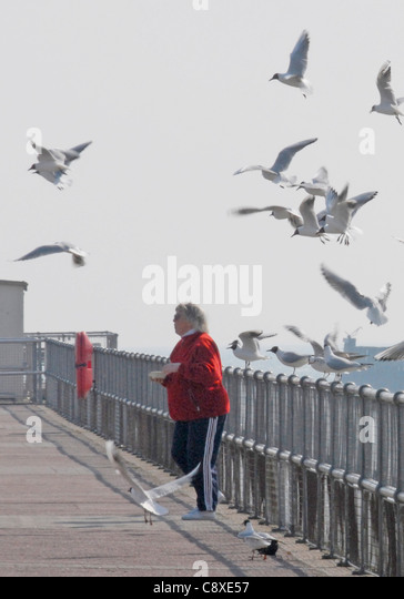 Gull attack at the seaside - a woman's lunch becomes the target for hungry gulls - Stock Image