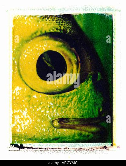 FISH EYE CLOSE UP ON POLAROID IMAGE TRANSFER - Stock Image