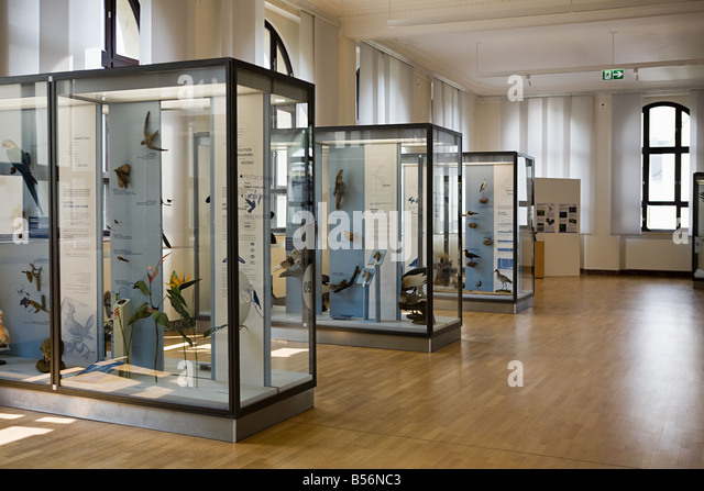 Stuffed birds in a museum - Stock Image