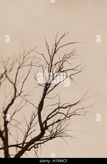 Bare tree in silhouette. Moody and poetic nature scene. Dark branches and sky. - Stock-Bilder