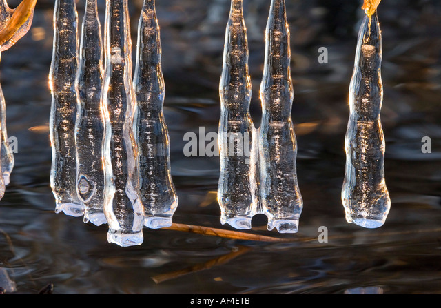 Icicles near a river in late evening light - Stock Image