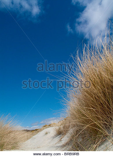 Blue sky over sand dune and beach grass - Stock Image