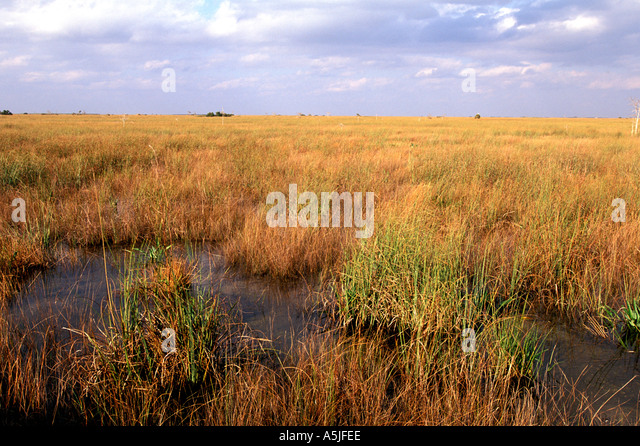 Florida Everglades National Park sawgrass prairie river of grass - Stock Image