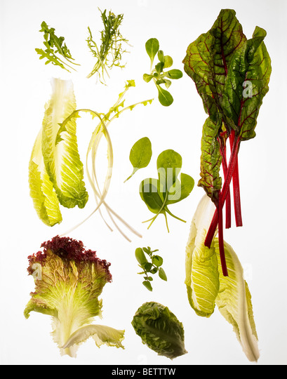 Salad ingredients, different green leaves suitable for salads. - Stock Image