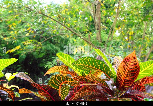 Jungle rainforest Yucatan Mexico Central America plants - Stock-Bilder
