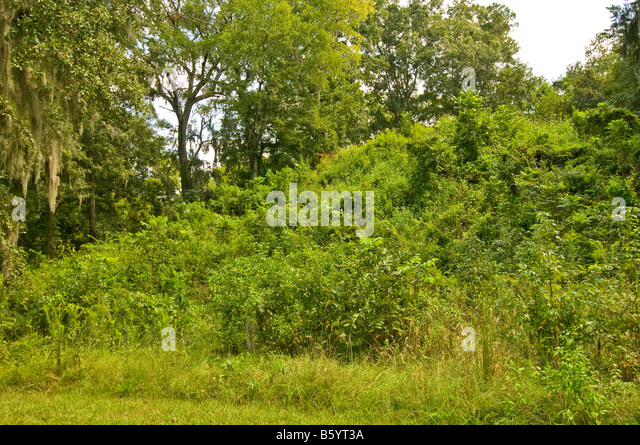 Lake Jackson Mounds Archaeological State Park Tallahassee Florida Indian earth temple mounds - Stock Image
