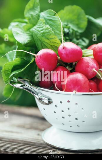 Fresh raddish in a dish in a garden - Stock Image