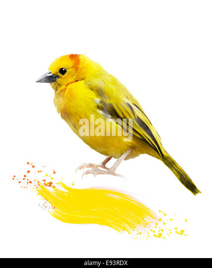 Watercolor Digital Painting Of Yellow Bird - Stock-Bilder