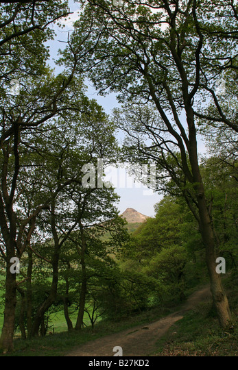 Footpath through woods towards Roseberry Topping, North Yorkshire - Stock Image