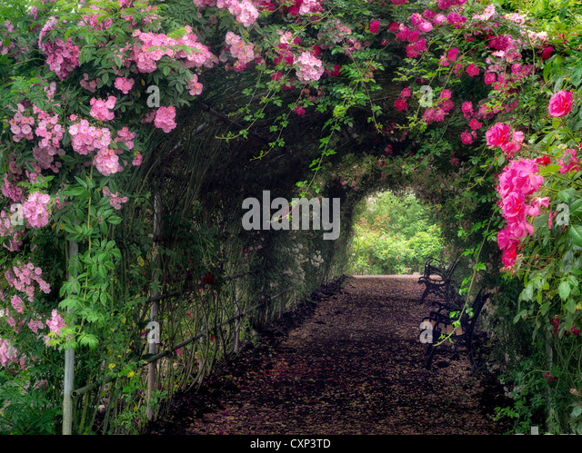 Rose arbor. Heirloom Gardens. St. Paul, Oregon - Stock Image