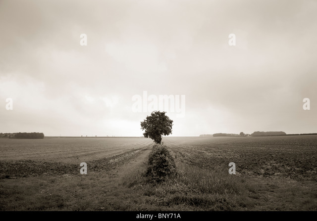 Lone tree in open field - Stock Image