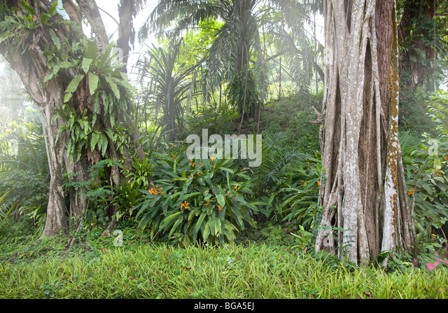 Rainforest margins, Malaysia - Stock Image