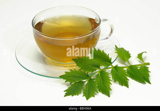 Common Valerian (Valeriana officinalis). A cup of tea with leaves, studio picture - Stock Image