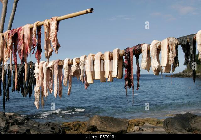 sperm whale meat