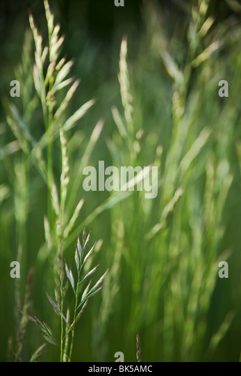 green grass background - Stock Image