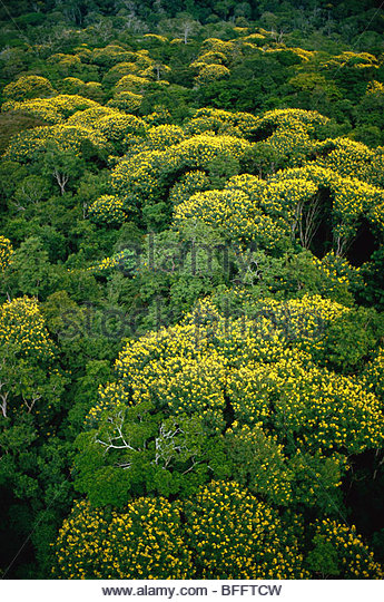 Flowering trees in lowland rainforest (aerial), Wamba, Democratic Republic of Congo - Stock-Bilder