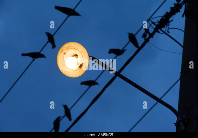 Birds on a wire. Yellow street lamp against a dark blue sky. - Stock Image