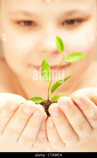 The boy observes cultivation of a young plant. - Stock Image